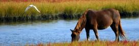 Viande de cheval: plus aucune trace dans les lasagnes