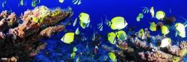 Les abysses marines, encore plus polluées que la surface de la terre?