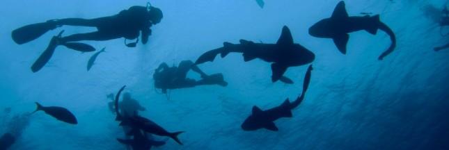 Belize: découverte d'une nouvelle espèce de requin