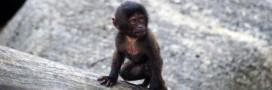 Extinction biologique: la moitié des espèces pourraient s'éteindre d'ici 2100