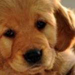 Posséder un animal de compagnie est bon pour la santé!...