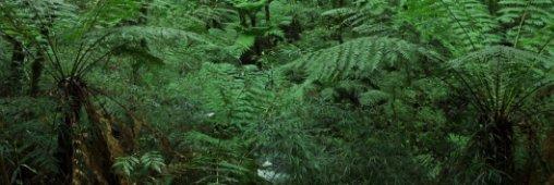 plantation d'arbres monde