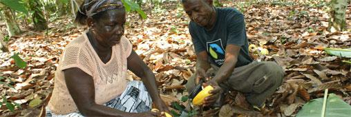 Production mondiale de café bio et équitable