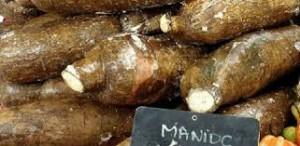 Le manioc sert aussi à fabriquer du biocarburant