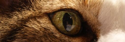 yeux de chat litière fait maison