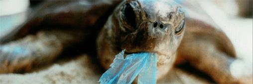 Déchets plastiques déversés dans les océans