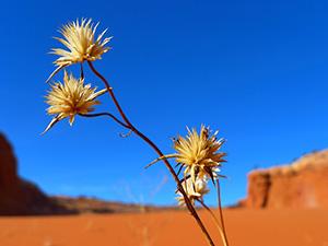fleur-desert-eau-nature-chaleur-aride-01