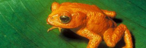 14 espèces animales disparues - DIAPO