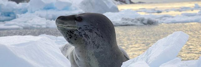 fonte des glaces antarctique groenland