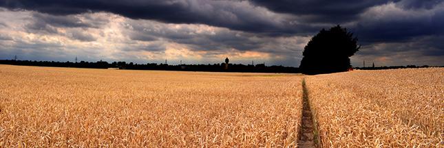 vols agriculture