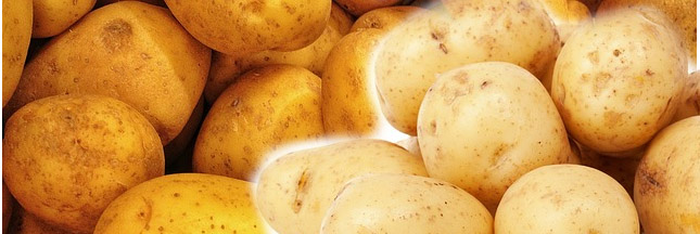 Les pommes de terre ont la patate