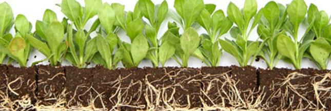 Pollution - les plantes qui purifient les sols pollués