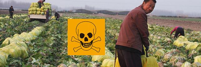 Les légumes asiatiques lourdement contaminés aux pesticides