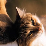 Faire garder ses animaux domestiques durant les vacances (1)...