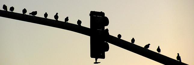 mortalité des oiseaux