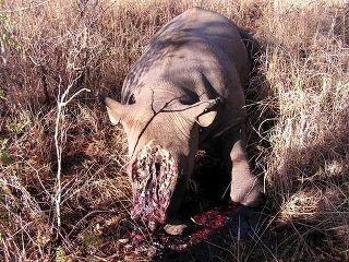 extinction-rhinoceros-sans-corne