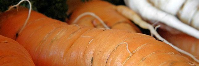 Les grands aliments : éloge de la carotte