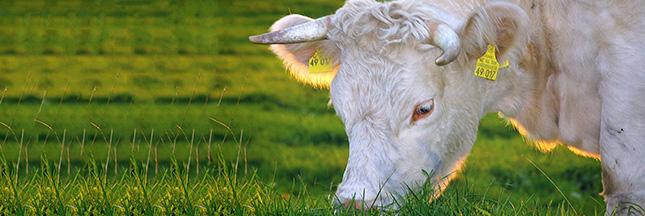 Consommation de viande bio en France
