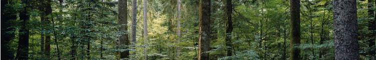 Croissance de la forêt en Europe